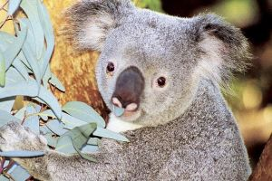Perth Zoo General Entry Ticket and Sightseeing Cruise - Surfers Paradise Gold Coast