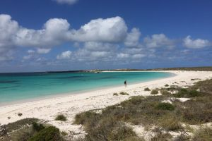 Abrolhos Island Half Day Fly and Flipper - Surfers Paradise Gold Coast